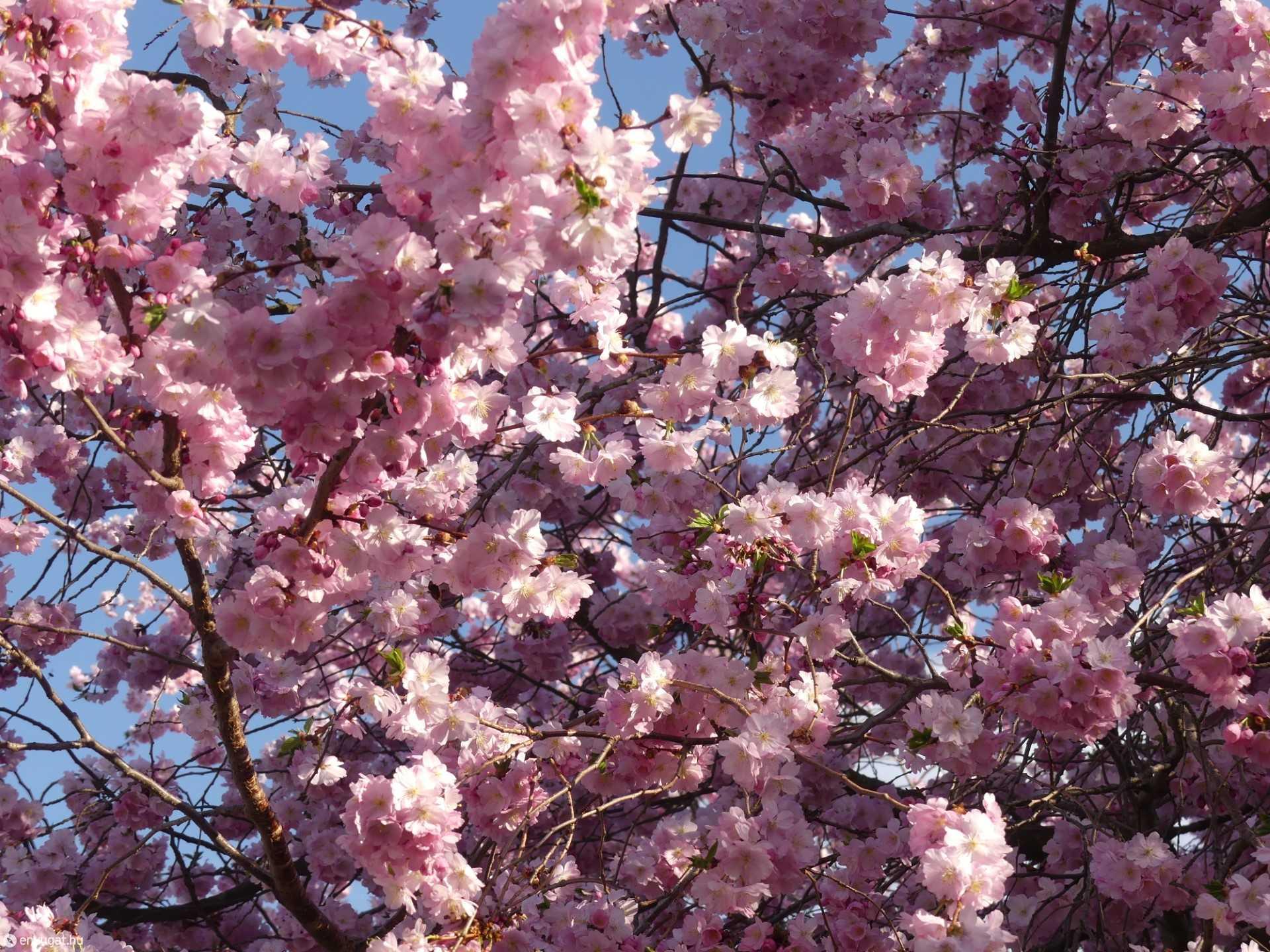 Tagadhatatlanul itt a tavasz
