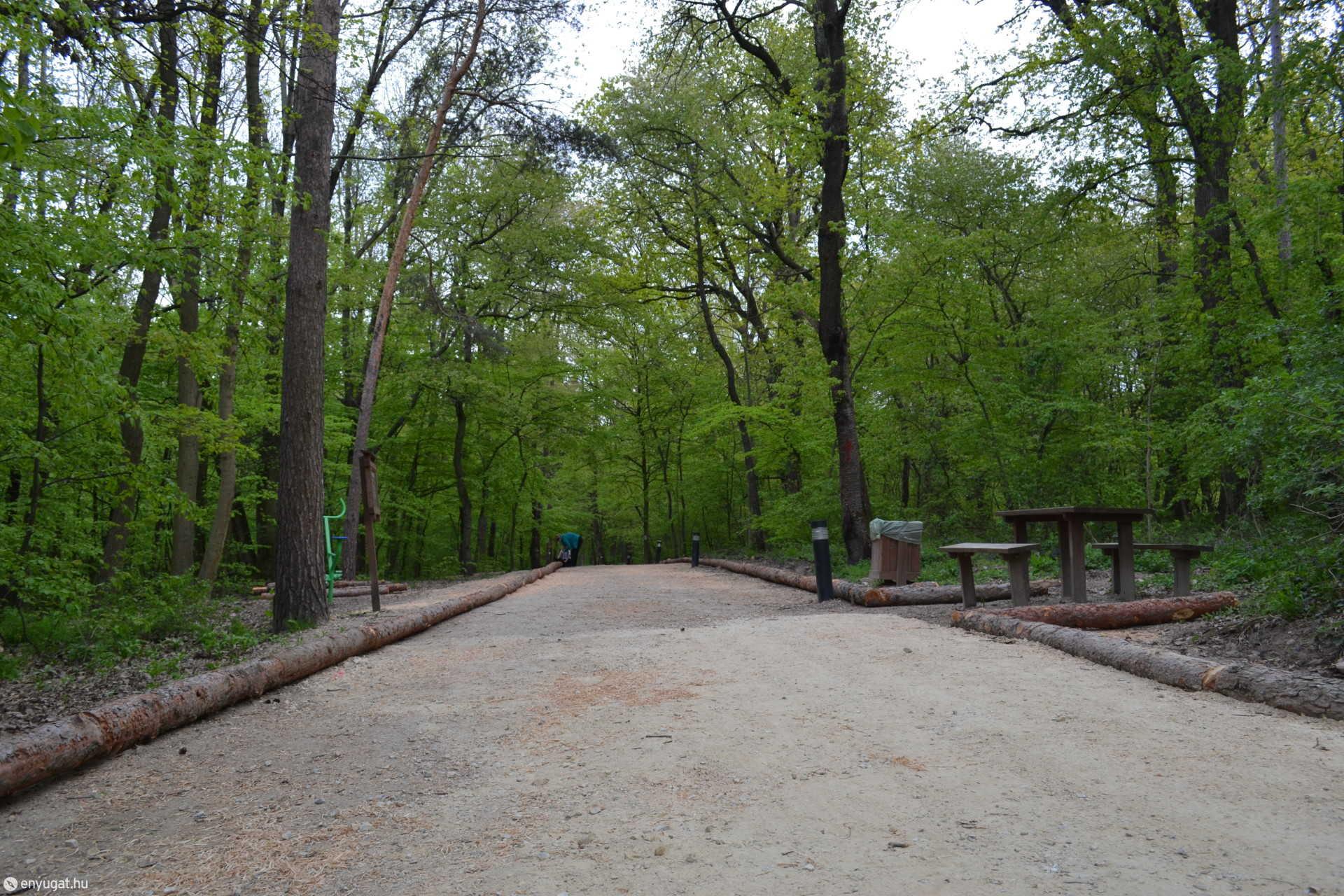 Öt-hat évente újra kell tölteni az erdei sétányt, de most újdonság a vörösfenyő szegély.