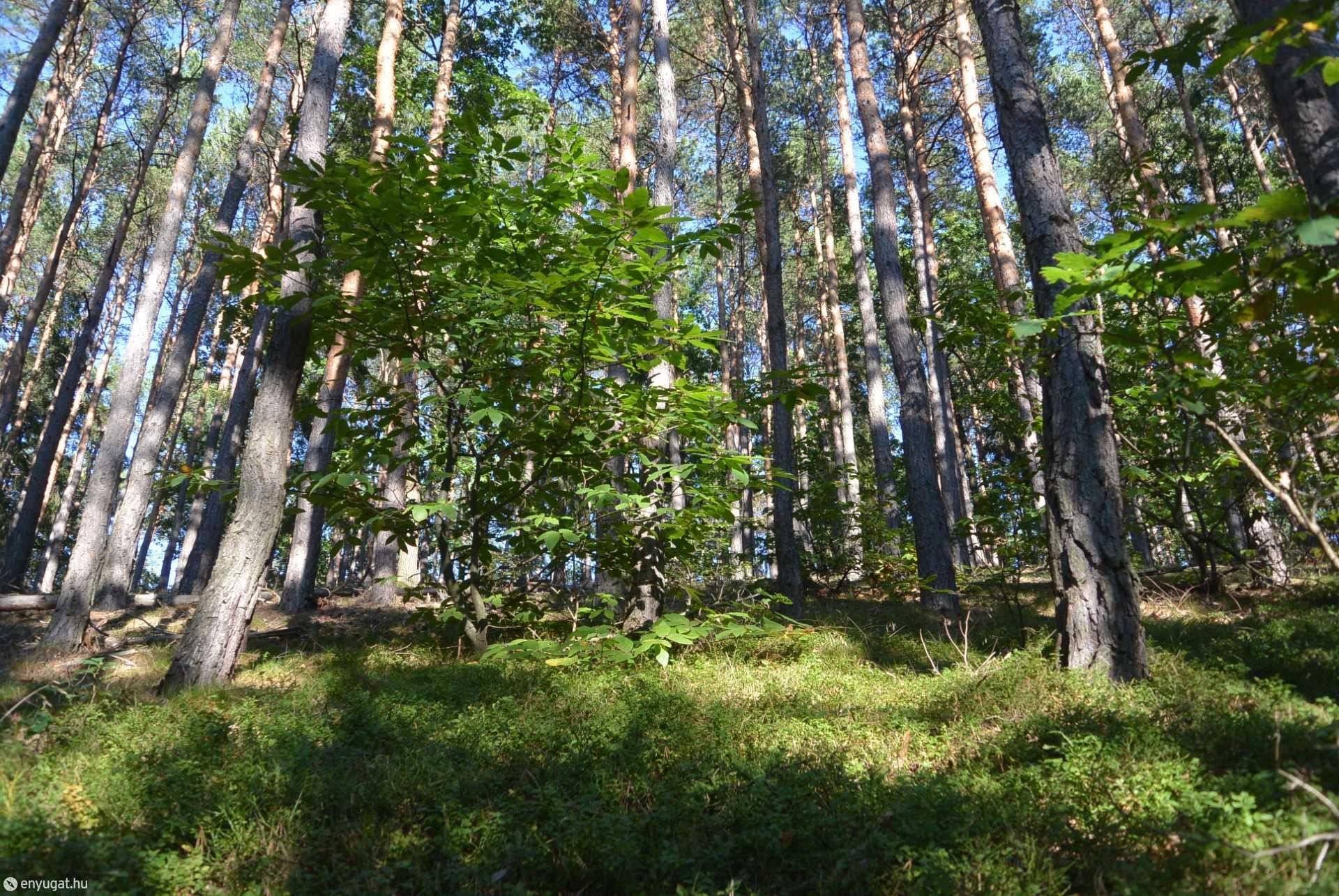 A Soproni-hegység nyár végén