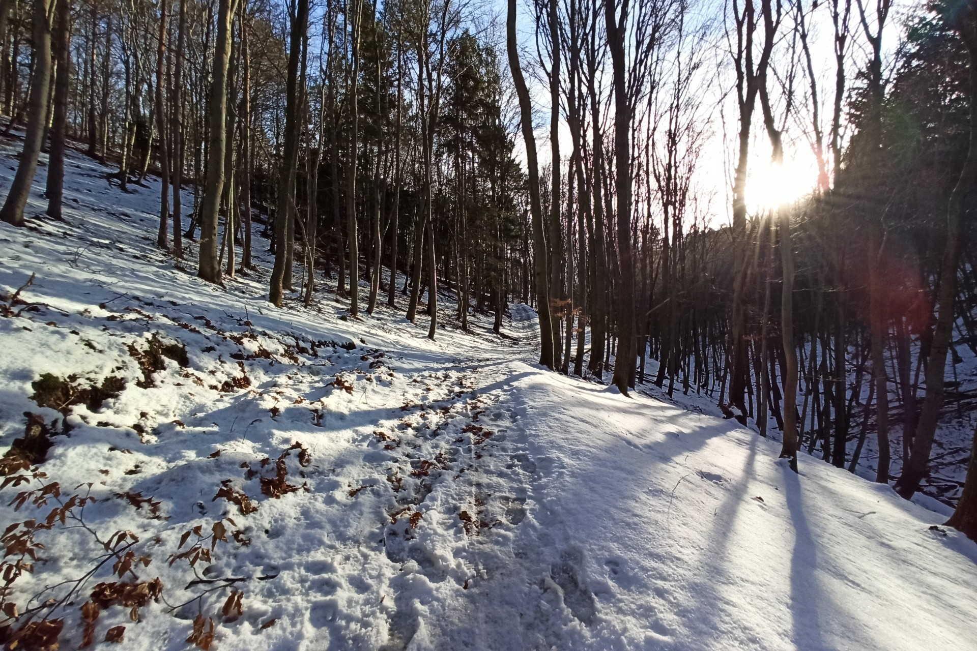 Olvadófélben a Soproni-hegységben