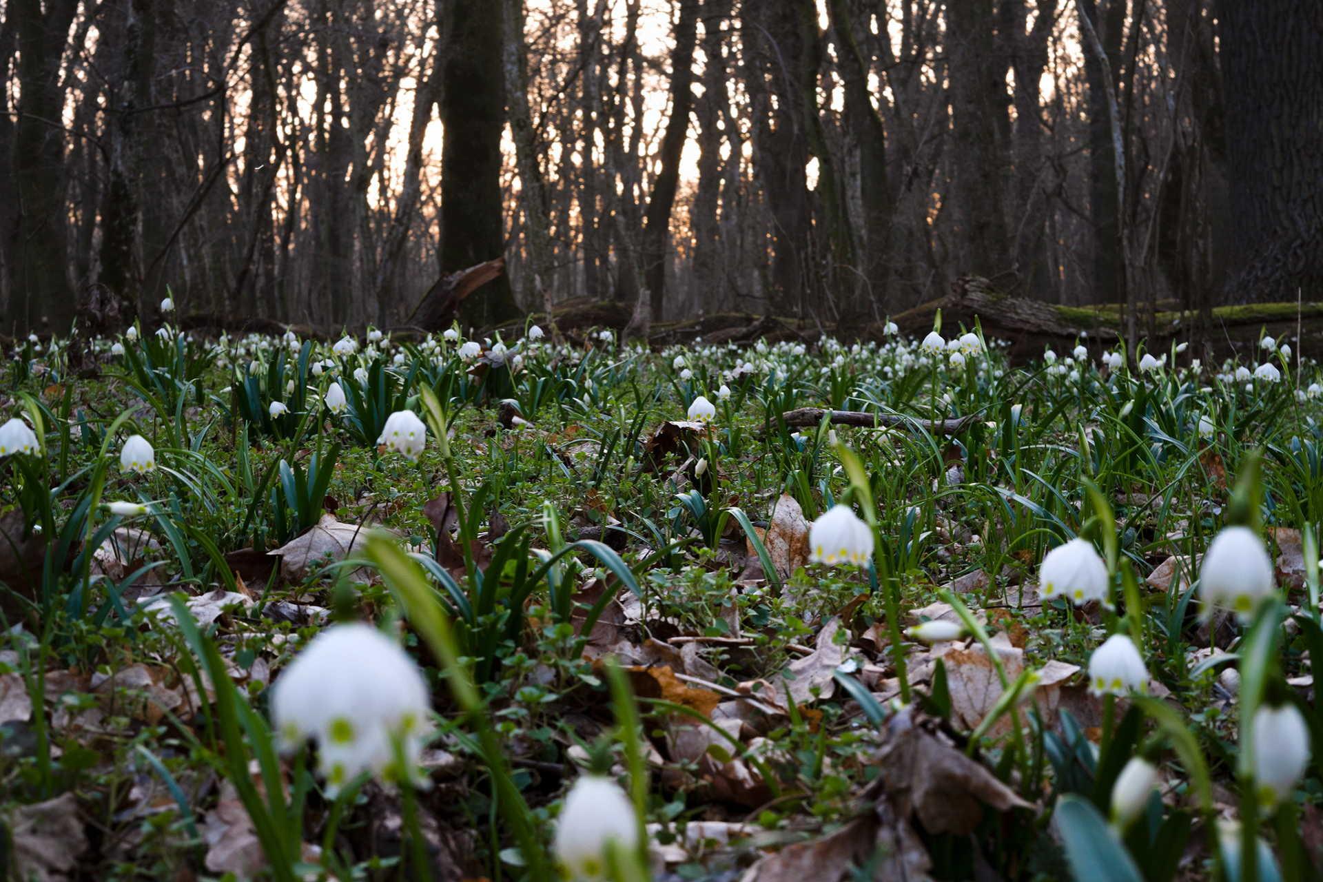Gyönyörű a csáfordi erdő ilyenkor, vigyázzunk rá!