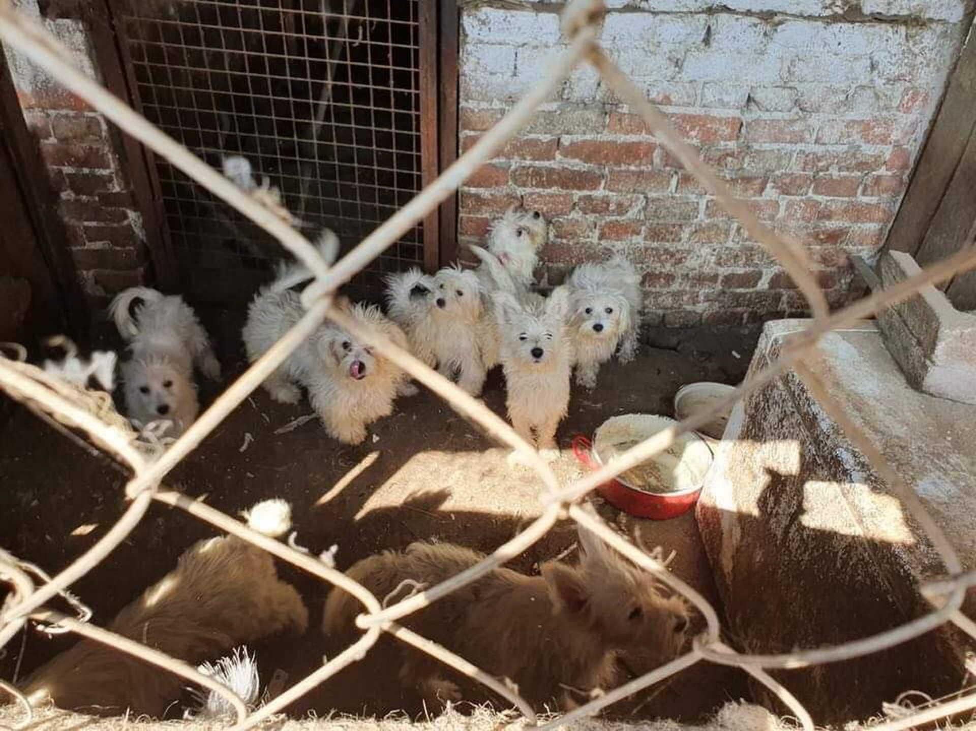 megnémított kutyák